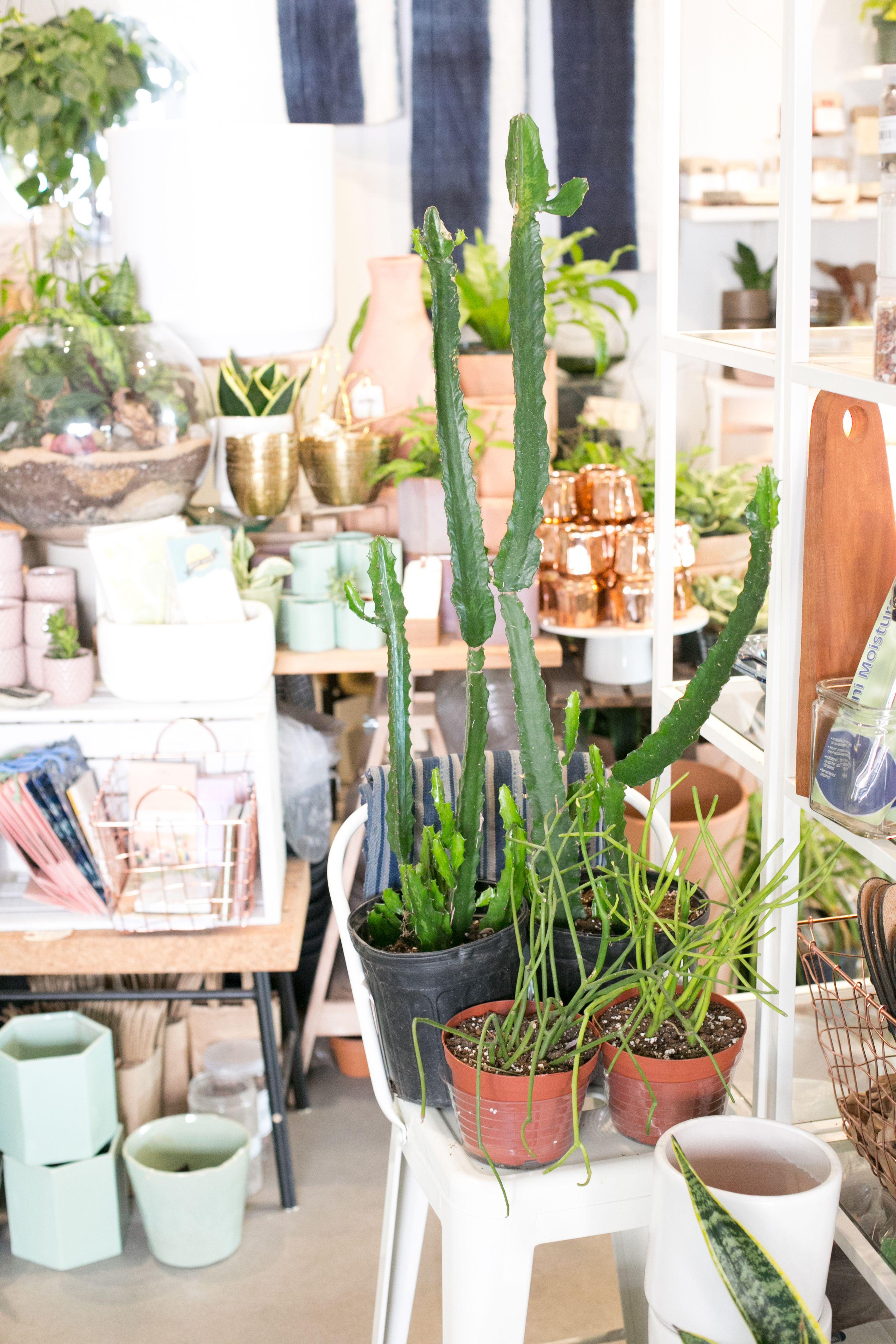 The ZEN Succulent Plant shop Plants, Modern terrarium