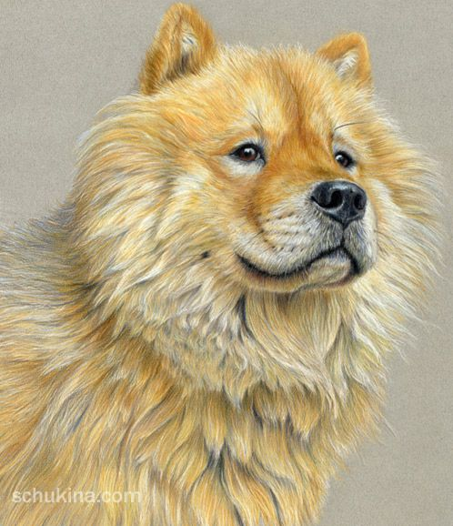 Golden retriever portrait drawn with color pencils on colored paiper size 12 x 16 drawing - Dessin golden retriever ...