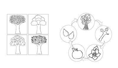 Apfelfaltbuch Apfel Grundschule Herbst Im Kindergarten Apfel