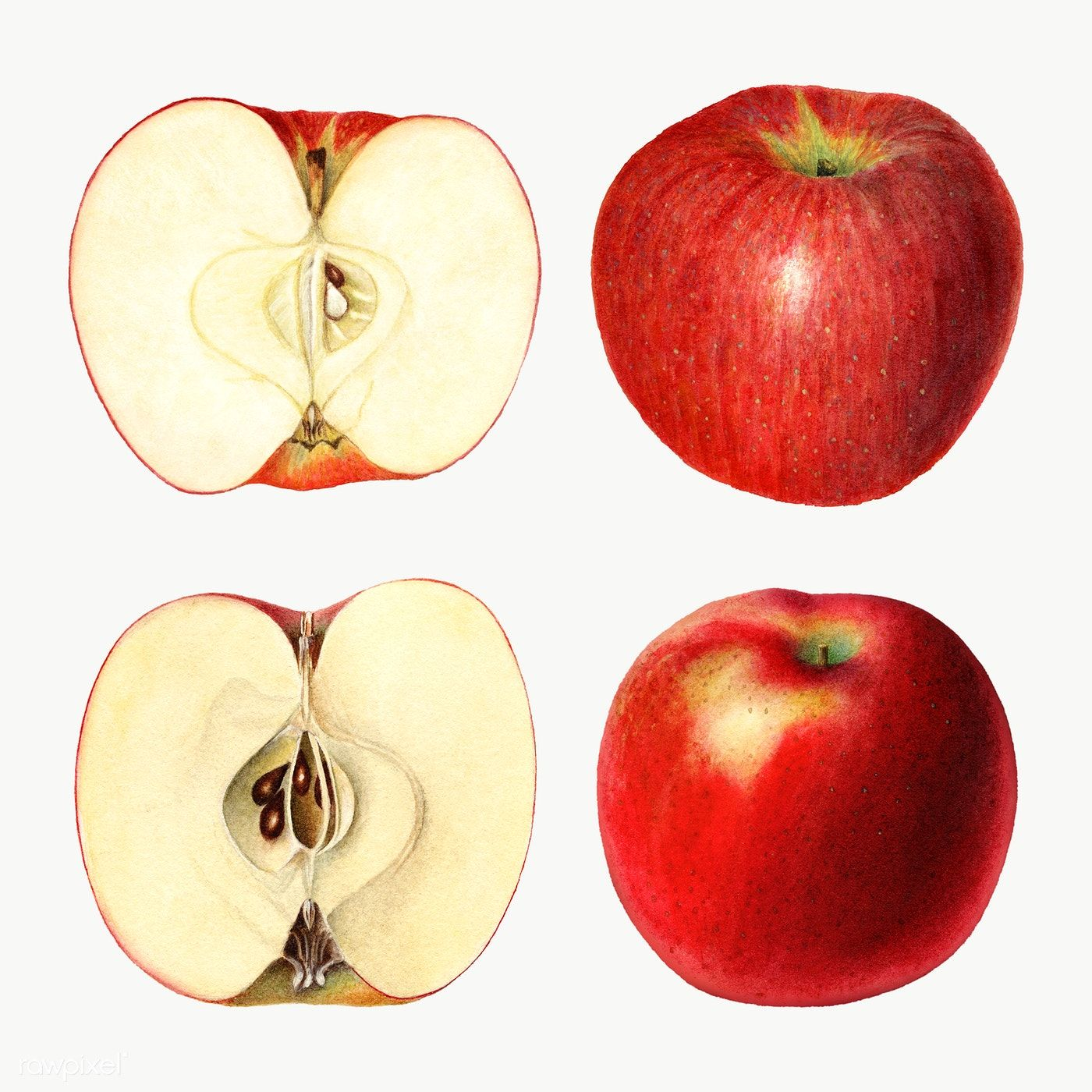 Download Premium Png Of Hand Drawn Sliced Red Apples Illustration 2296970 Apple Illustration Red Apple How To Draw Hands