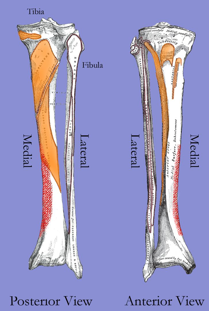 Running writings: Injury Series: Medial tibial stress syndrome ...