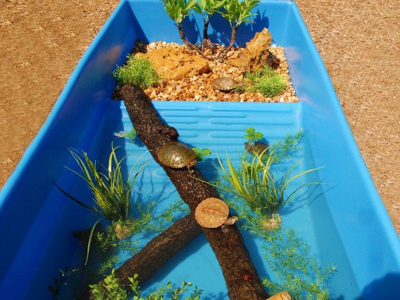 Blue Water Turtle Tub For Sale From The Turtle Source