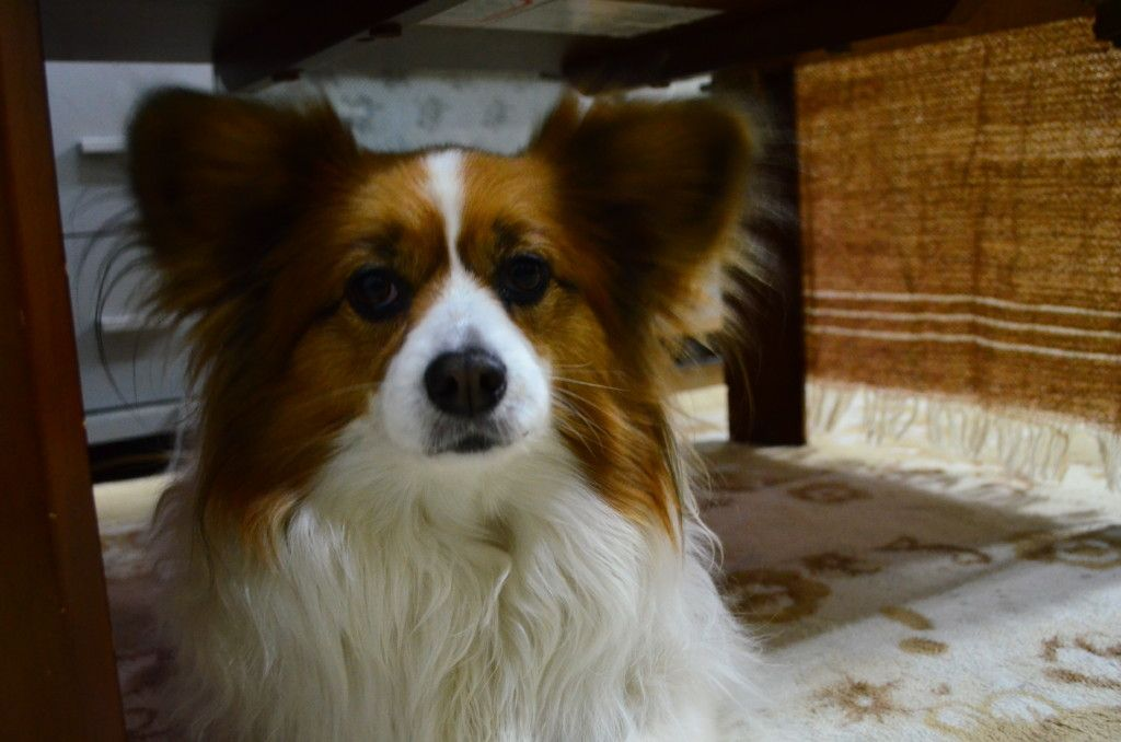 愛犬が急性膵炎に 無事に回復したけど獣医さんに教わった症状や原因 治療法まとめ 急性膵炎 犬 獣医