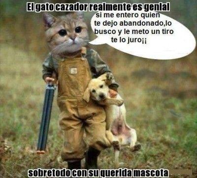 Imagenes Frases Graciosas Cortas De Animales Gatitos Divertidos Humor Divertido Sobre Animales Poemas De Animales