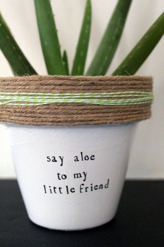 Garden Sayings Don T Stop Beleafing Aloe Is It Me Your Looking