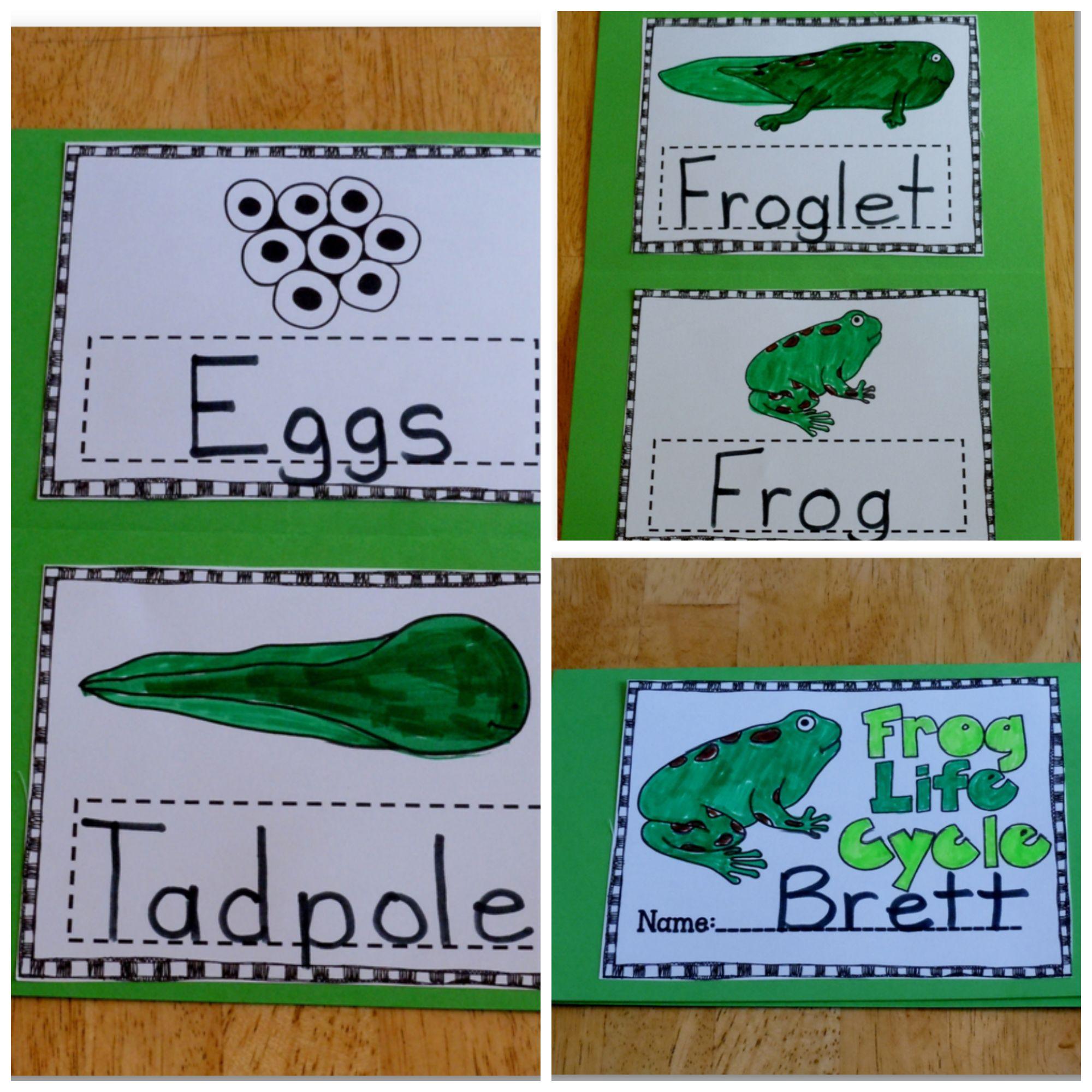 Freebie Frog Life Cycle Foldable
