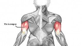 The Proper Exercise for the Triceps