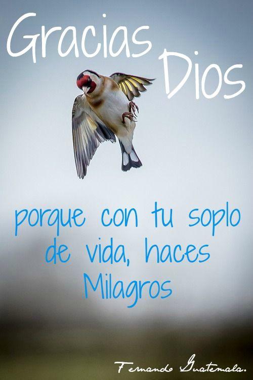 Con Tu Soplo De Vida Haces Milagros Gracias Dios