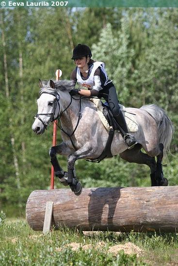 Estonian Native gelding Engagen