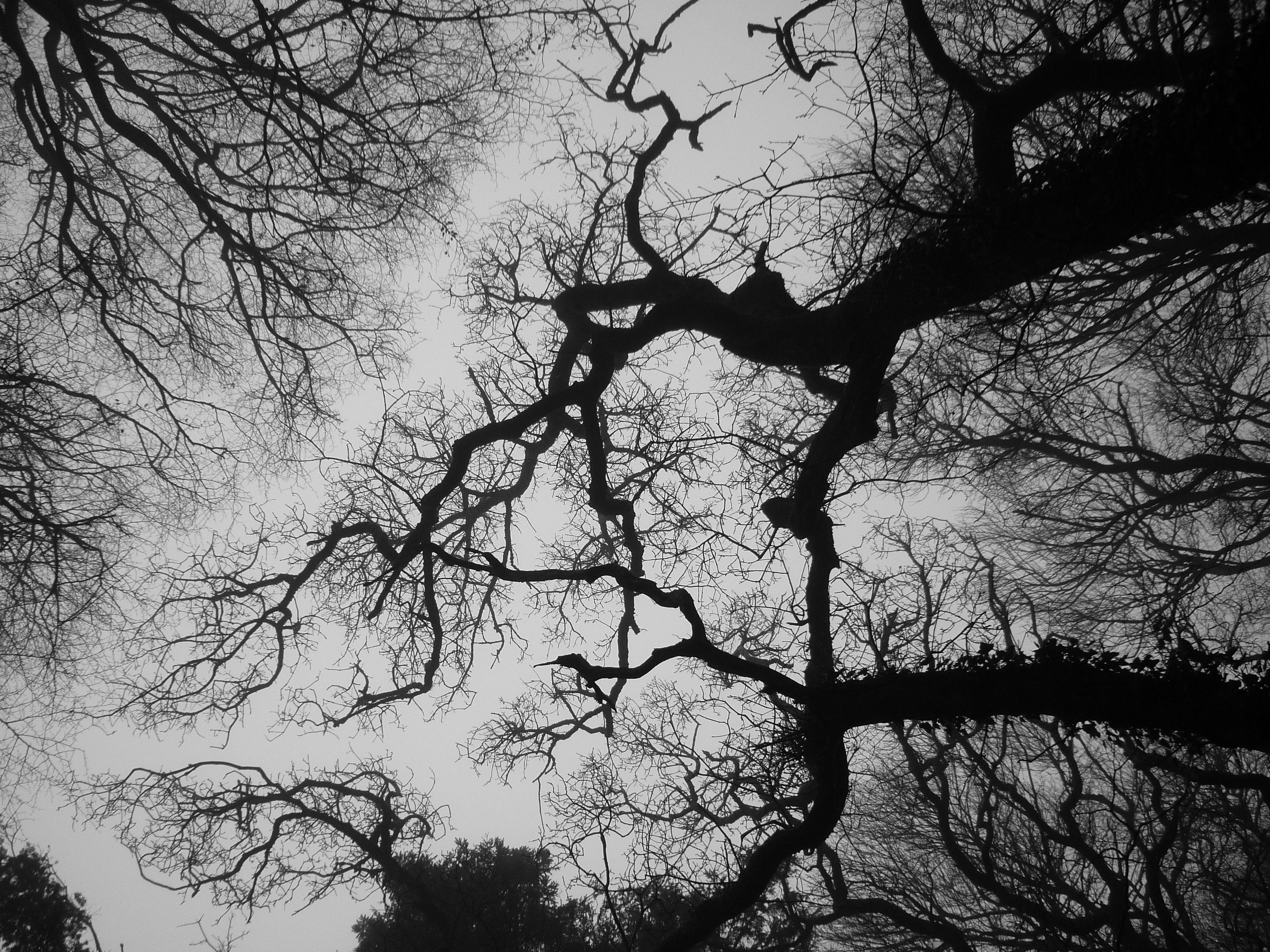 Ireland trees by Efi