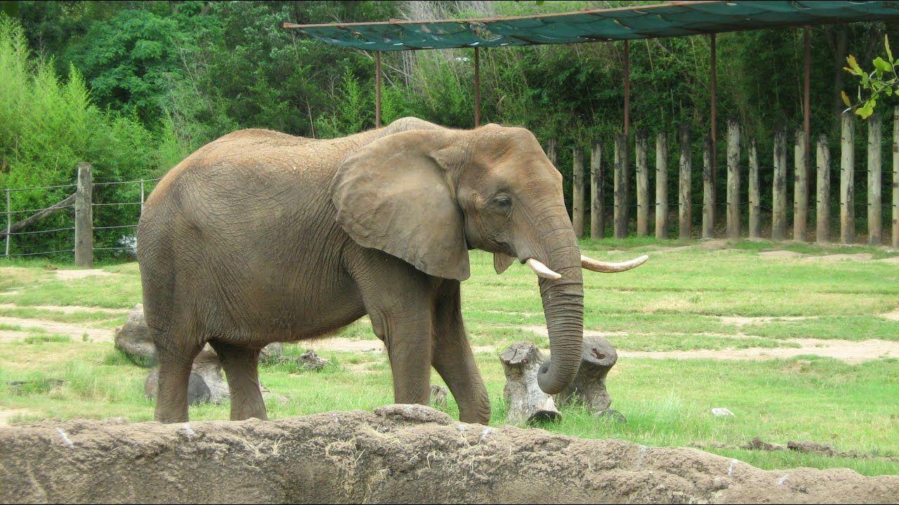 صور حيوانات نتائج بحث صور ياهو Image Animals Image Search