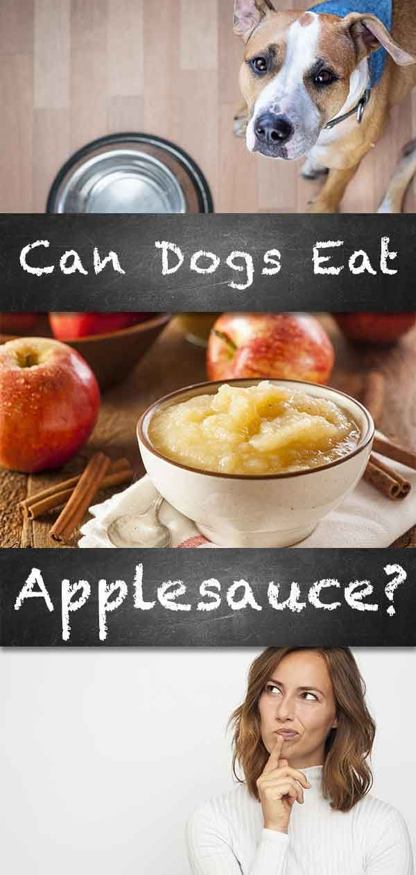 Can Dogs Eat Applesauce With Their Dinner Too? | Can dogs ...