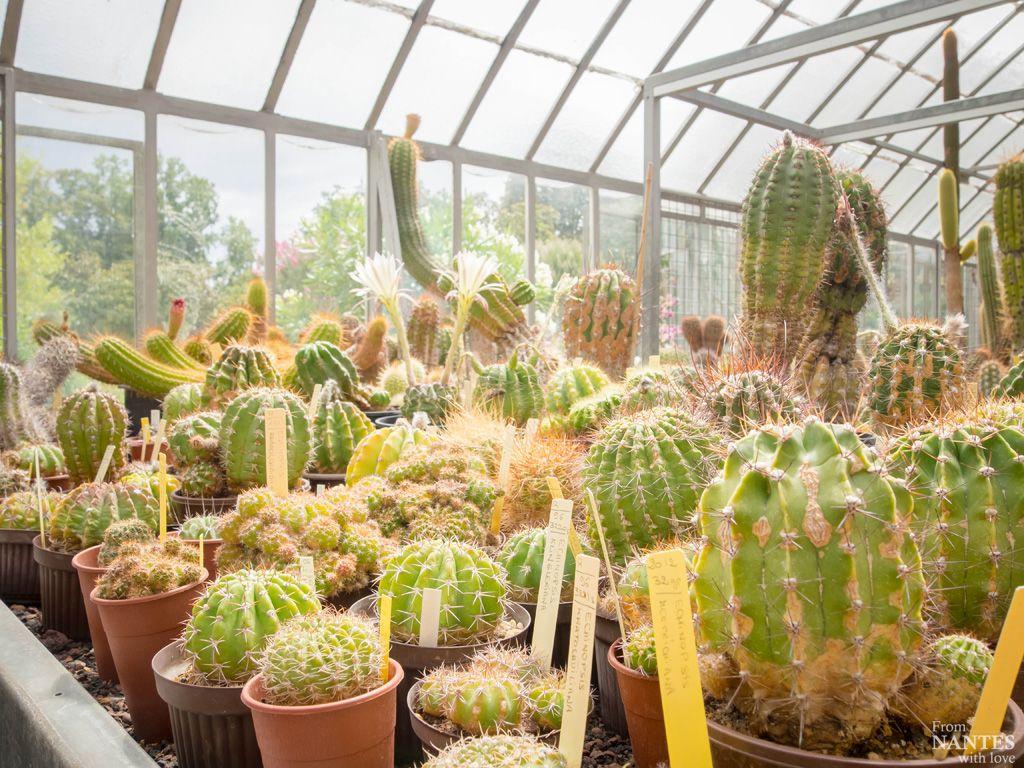 Visite Serres Jardin des Plantes Nantes, image Nantes with Love ...