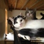 Hope For Hopewell Junction Cats With Images Animal Articles Cats
