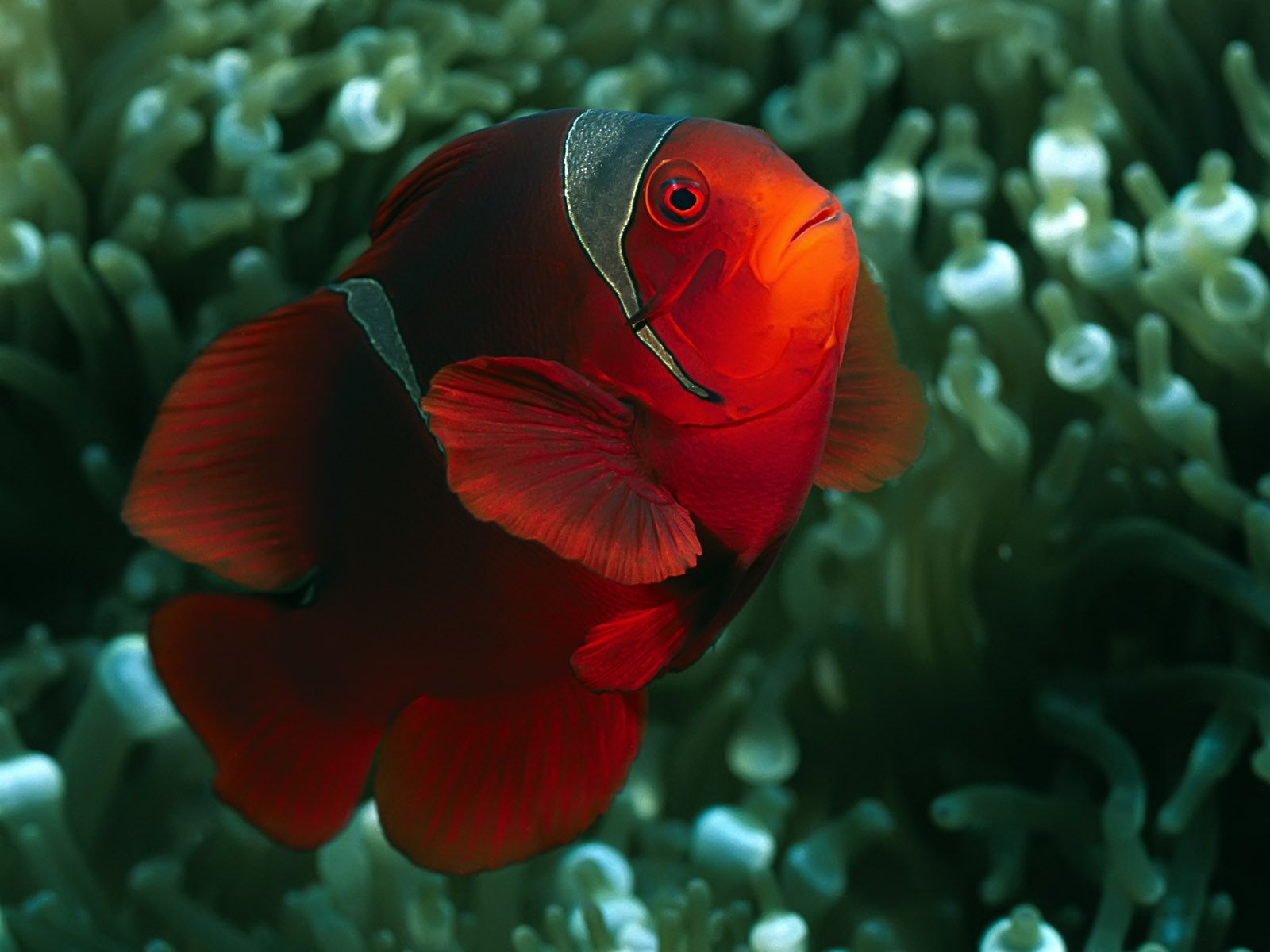23 Images for the Beautiful and Amazing Underwater Animals World ...