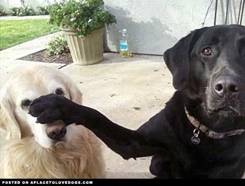 Never mind him…. now did I hear you say something about a treat?