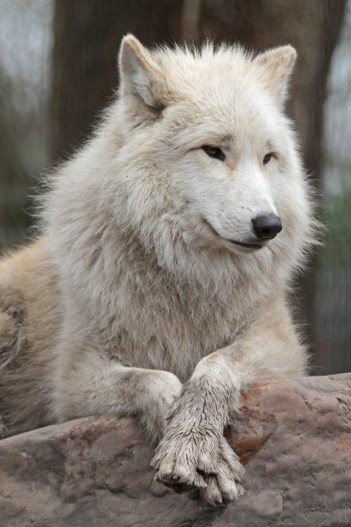 Uncover The Animal Kingdom - #animal #Kingdom #Uncover #animalkingdom