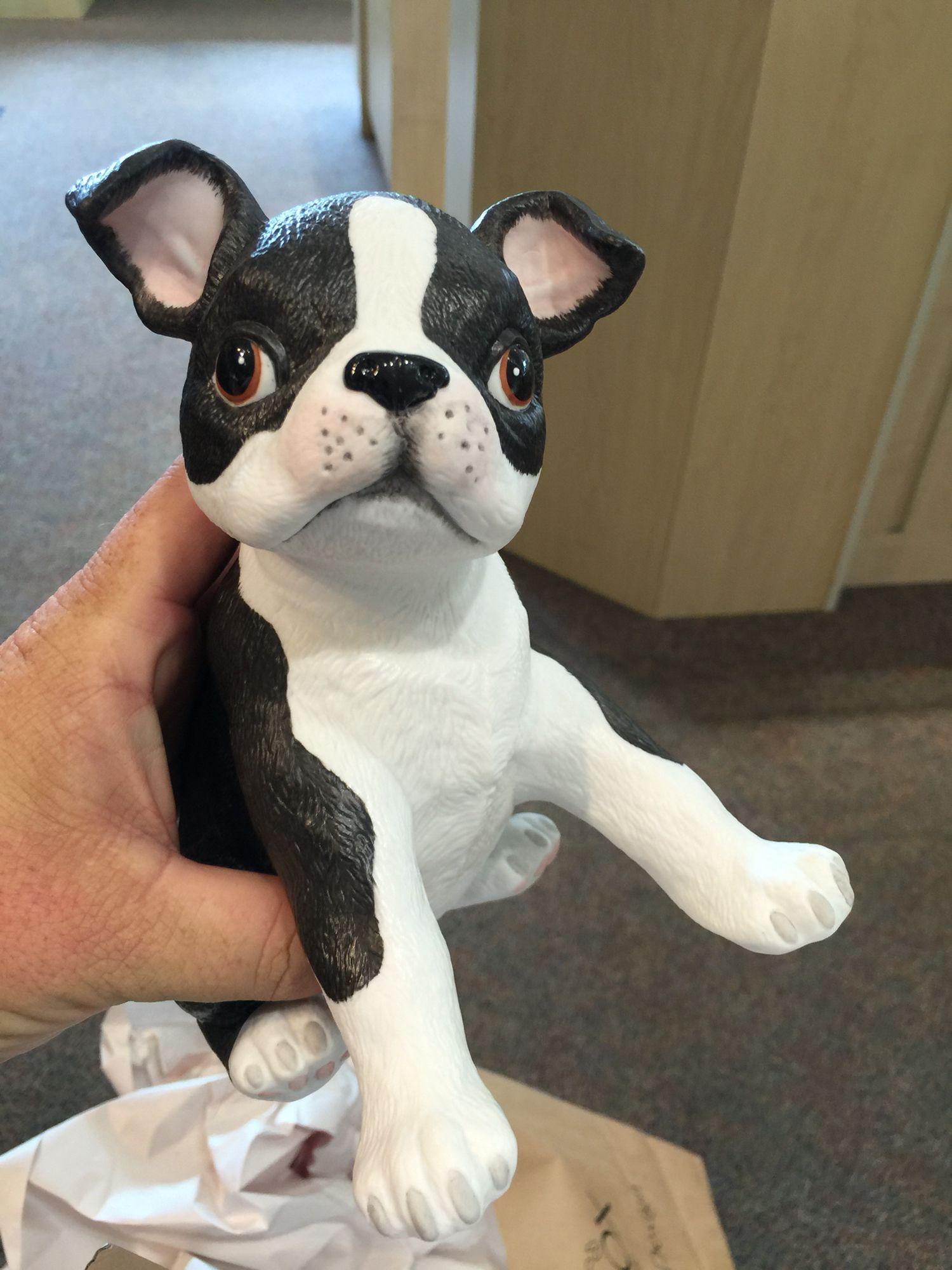 Lennox boston terrier terrier french bulldog