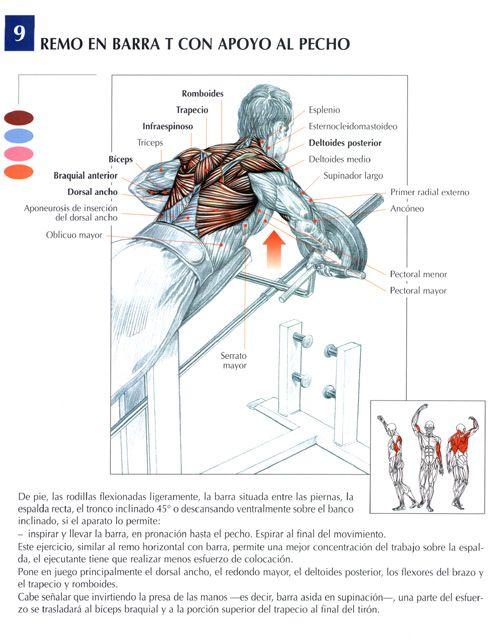 Ejercicio Espalda   Anatomía de ejercicios hombres   Pinterest ...
