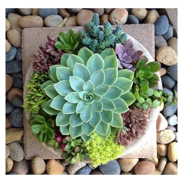Nice Succulent Arrangement By Chicweed Patio Garden See More