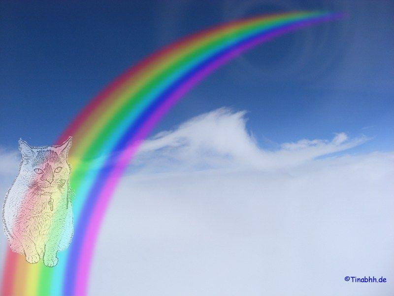 Die Regenbogenbrucke Regenbogenbrucke Regenbogen Brucke