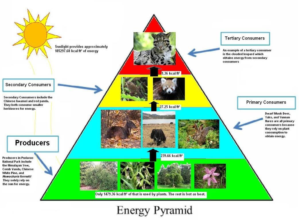 Pudacuo National Park Energy Pyramid Energy pyramid