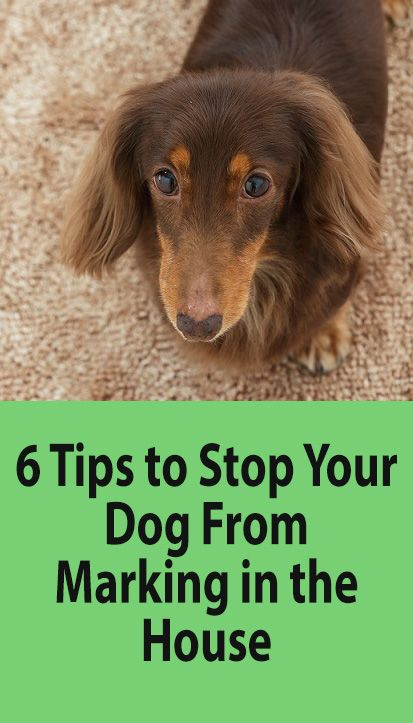 3ce2ed0a3d100406d0a13a5f25212155 - How To Get A Dog To Stop Marking In House