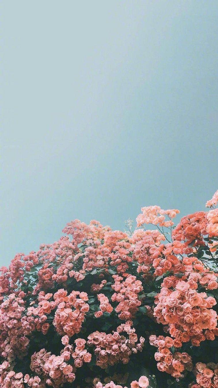Beautiful Flower Iphone Wallpaper Flower Iphone Wallpaper