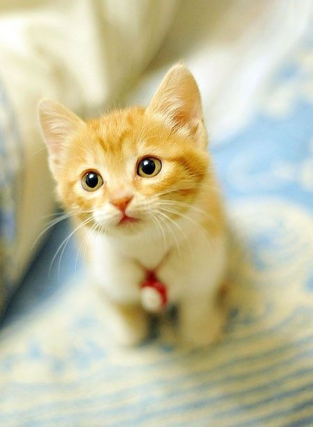 Sooooo cute! I want a orange kitten named Oliver!