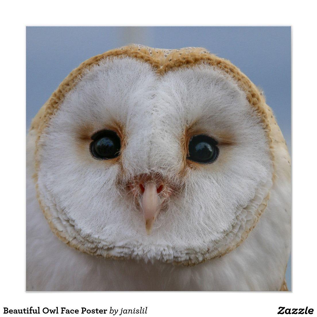 Beautiful Owl Face Poster