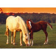 Beautiful Horses 500-Piece Jigsaw