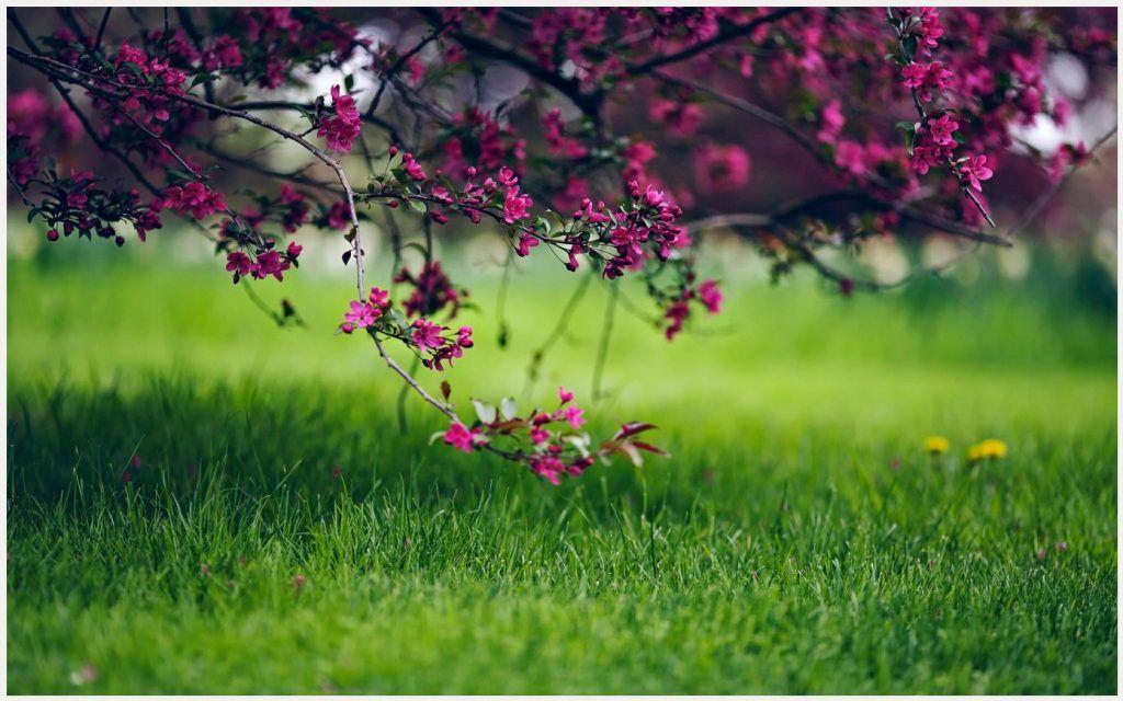 Beautiful Forest Flowers Wallpaper