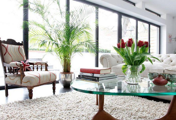 home decor plants living room