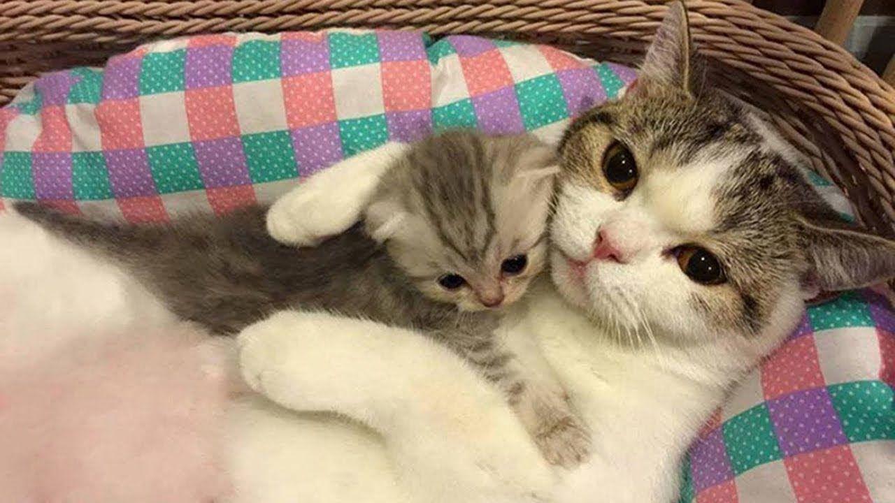 Mom Cat Taking Care To Her Cute Meowing Kittens Funny Video Cute Kitten Gif Kittens Cutest Little Kittens