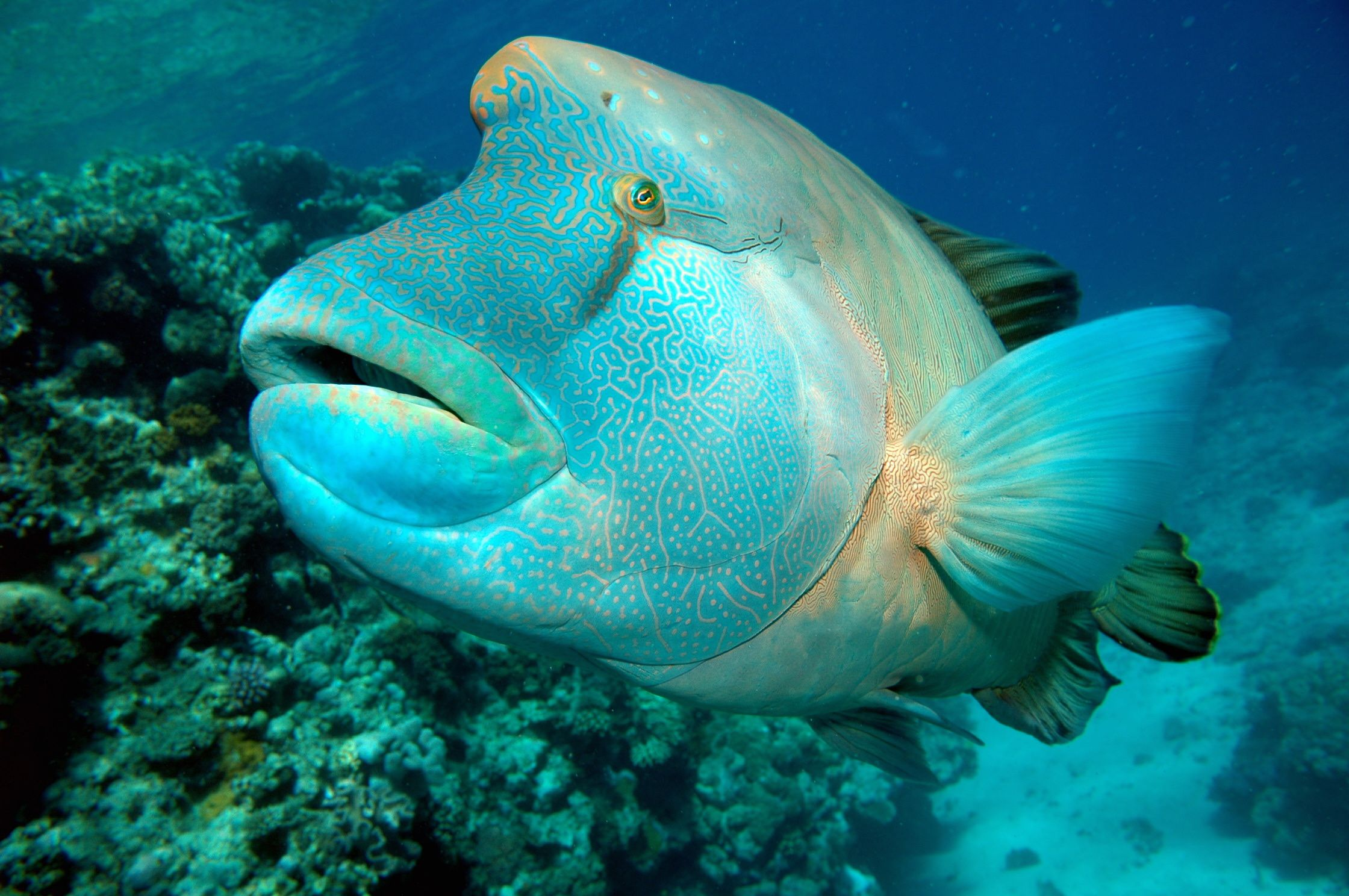 her name is Sarah and she lives in the Great Barrier Reef