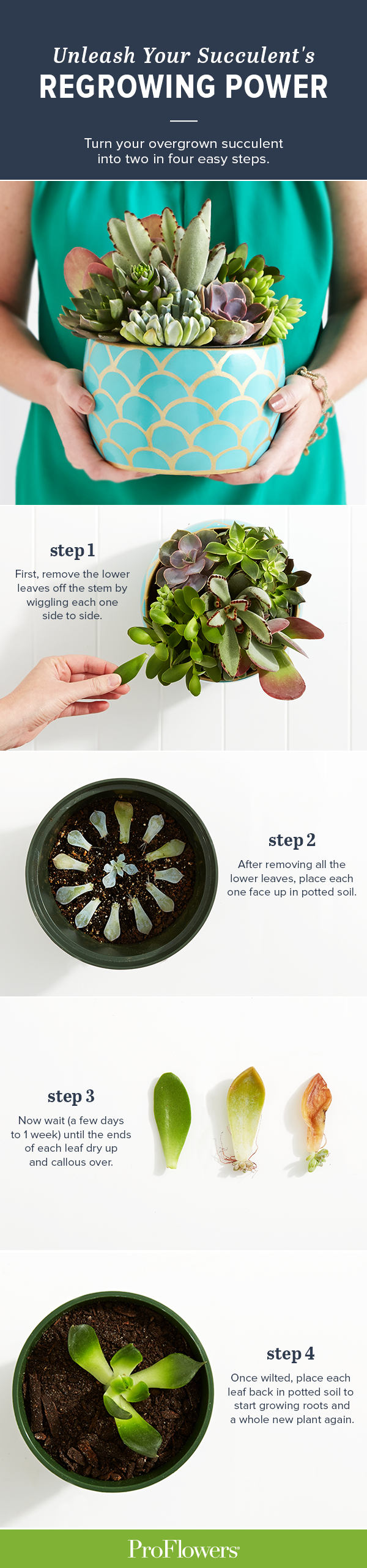 Have a succulent that's overgrowing its container? There's no need to kill or ditch the