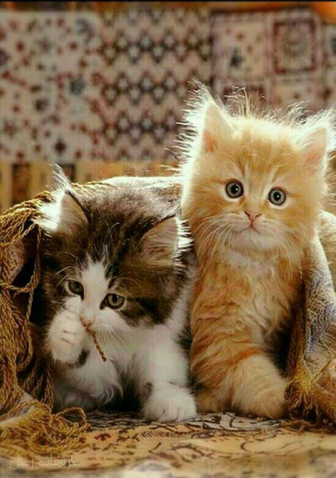 Pin by Sirpa Vidman on Cute cats Koira, Hassut kissat, Kissa