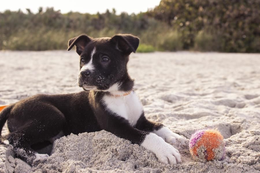 And who does that remind you of? Dog on the beach. Photo by Andrew Pons
