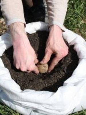 urban gardening ein kartoffelacker auf dem balkon kartoffelanbau kartoffeln pflanzen. Black Bedroom Furniture Sets. Home Design Ideas