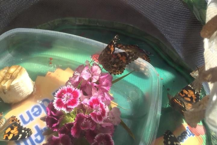 Thank you Kate Moss for sharing this picture of some very young, very happy butterflies!