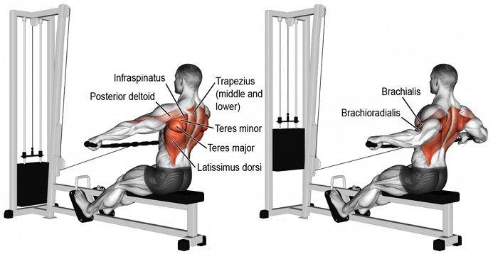 Image Result For Shoulder Workout Bodybuildinga