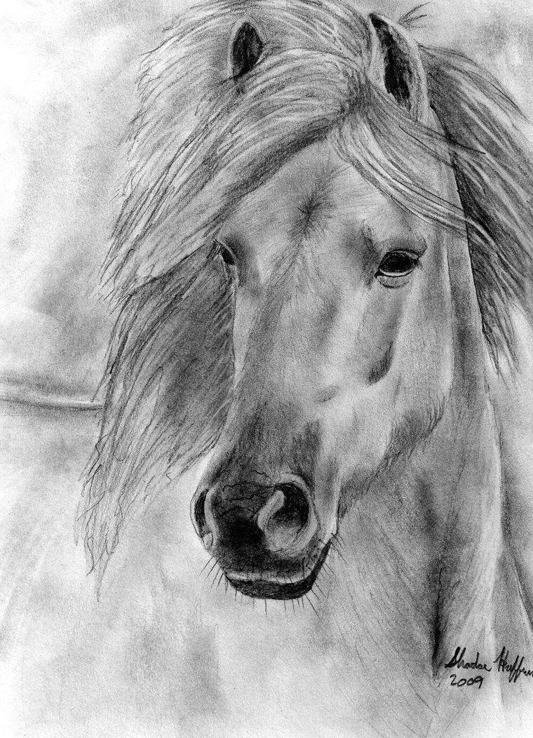 Wild Horse By Farfinmosker Paard Tekeningen Dieren Tekenen Paard Kunst