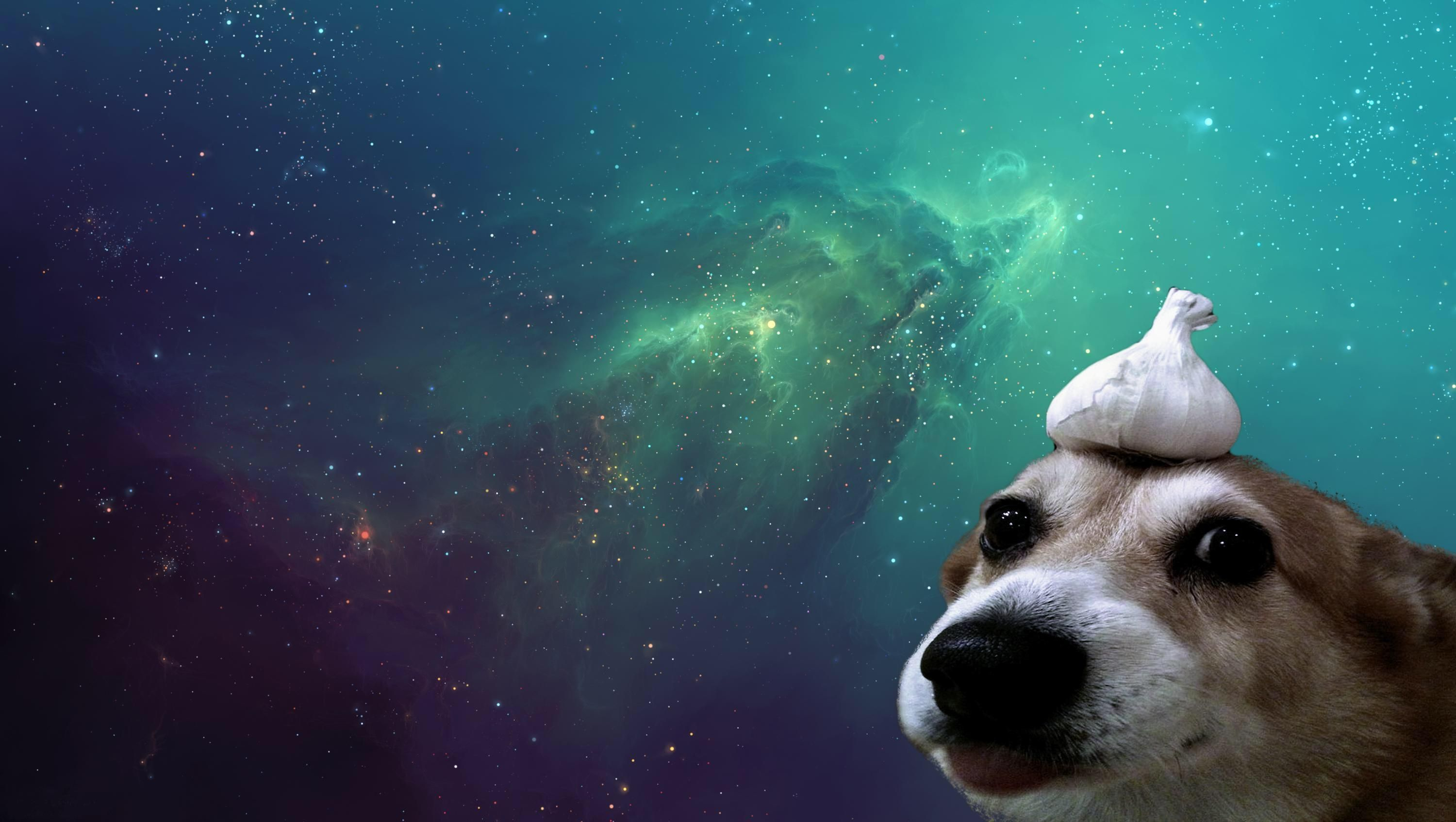 3000x1694 I Need More Funny But Aesthetic Wallpapers Like This Please Cutepuppywallpaperfor Animal Wallpaper Minimalist Animal Aesthetic Desktop Wallpaper