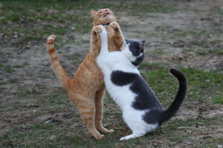 Смешная картинка котенок на танцах