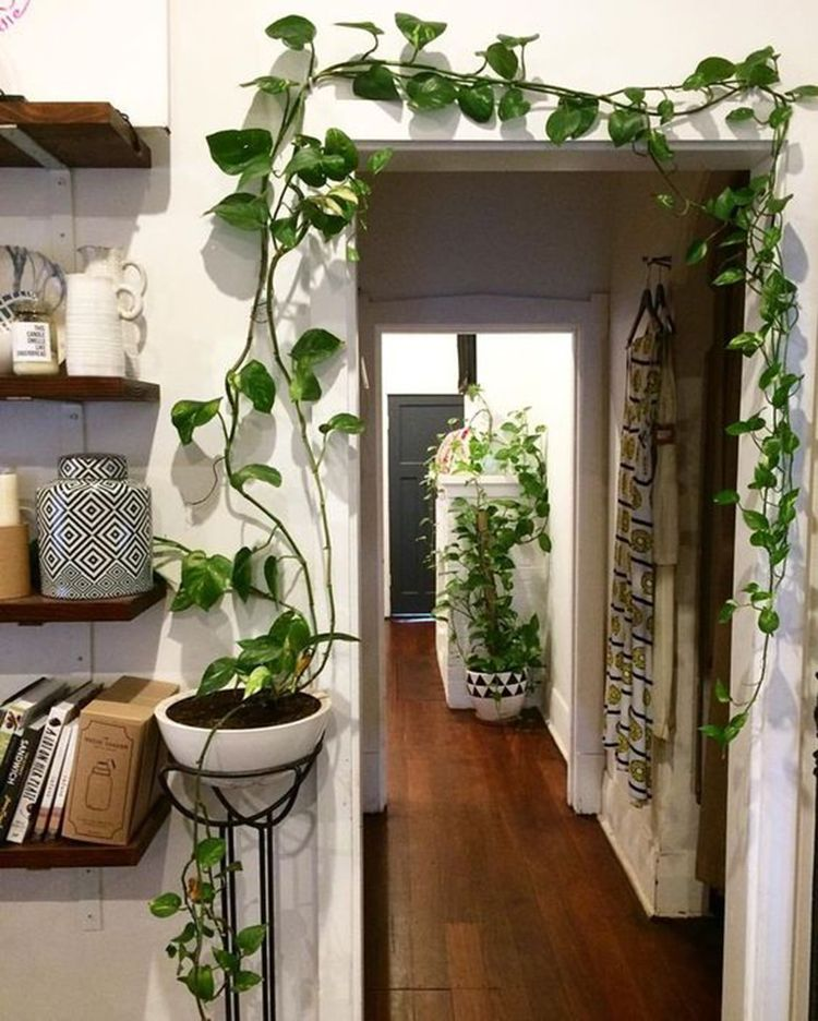 Indoor jungle small spaces gardening idees pour amenager son balcon bancos plant shelf green home decor garden herb wall also modernhomedecorideas modern ideas in pinterest rh