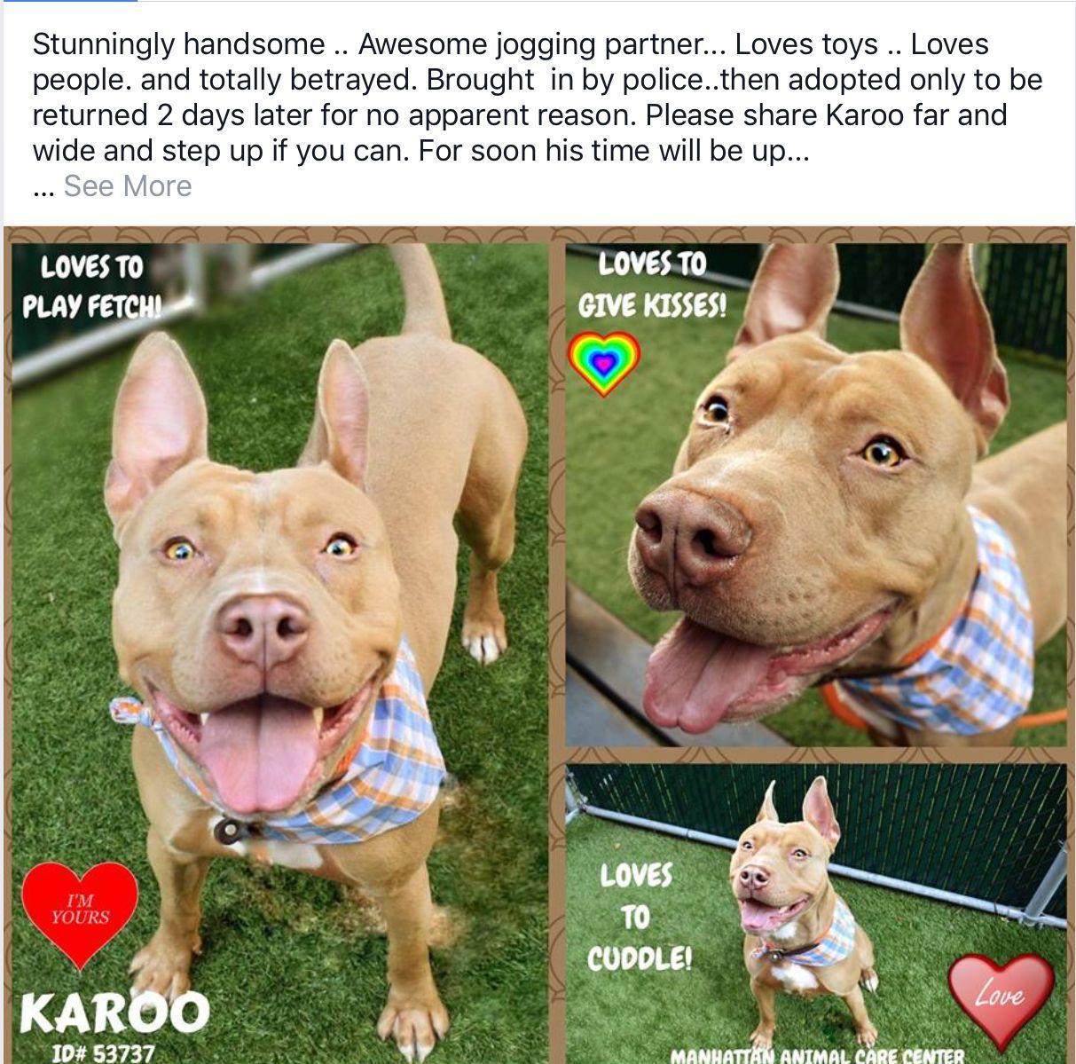KAROO NEEDS HELP😢😢 Nyc dogs, Dogs, Staten island new york