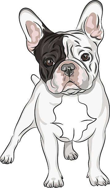 Image result for como dibujar un bulldog frances  7243d3e7aa4ae