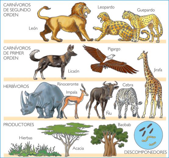 32 Ideas De Los Seres Vivos Seres Vivos Ciencias Naturales Ciencias De La Naturaleza