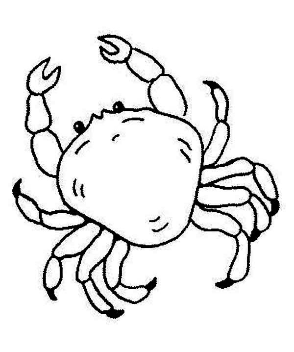 Free King Crab Sea Animals Coloring Page - Download & Print Online Coloring  Pages For Free Animal Coloring Pages, Fish Coloring Page, Monster Coloring  Pages