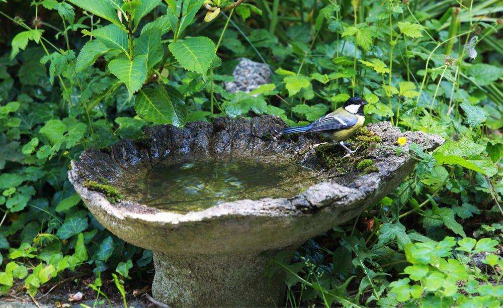 15 Tipps Fur Mehr Natur Im Garten Naturgarten Vogelbad Garten Garten